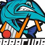 Barracudas